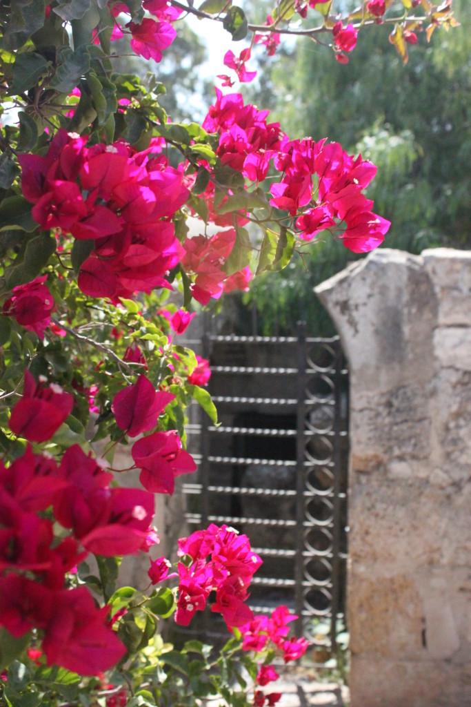 Flowers on Mt Transfiguration
